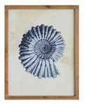 Wood Framed Wall Décor w/ Nautilus Image