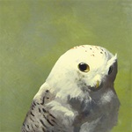 Question - Snowy Owl